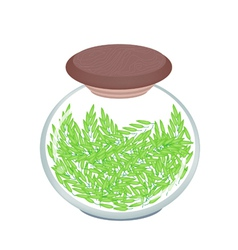 A jar of cereal plant of green rice vector