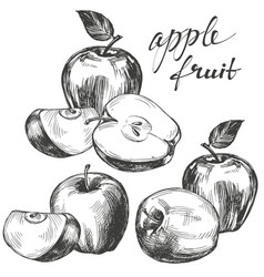 apple fruit set hand drawn vector image