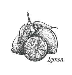 Lemon monochrome vector
