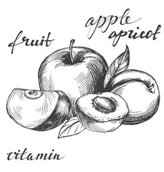apple and apricot fruit group set hand drawn vector image