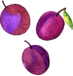 Watercolor drawing plums vector