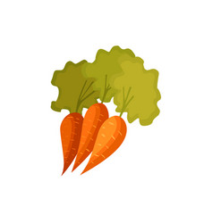 cartoon style carrot vegetables with green leaves vector image