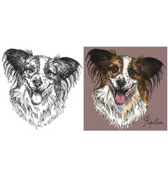 papillon dog in black and white and colorful vector image vector image