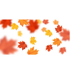 blurred falling leaves with wind isolated vector image vector image