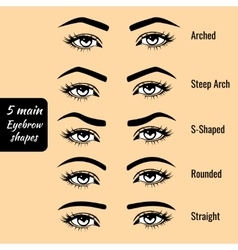 Basic eyebrow shape types vector
