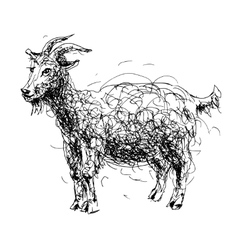 Sketch doodle drawing of goat or sheep chinese vector