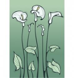 calla lily vector image