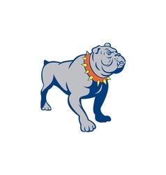 Angry Bulldog Standing Cartoon vector image vector image