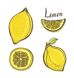 set of hand drawn sketch lemons Isolated vector image