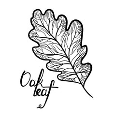 hand drawn oak leaf with lettering isolated vector image vector image