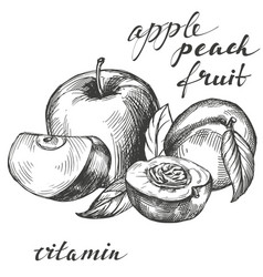 Apple and peach fruit group set hand drawn vector