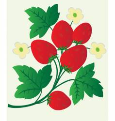 Berries and flowers of strawberry vector
