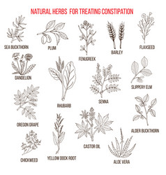 best herbal remedies for treating constipation vector image vector image