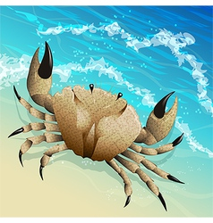 The crab vector image vector image