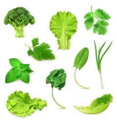 Green vegetables and herbs set organic vegetarian vector image