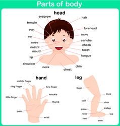 Leaning Parts of body for kids Worksheet vector image