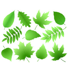 Set of green leaves and branches vector