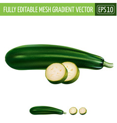 Zucchini on white background vector