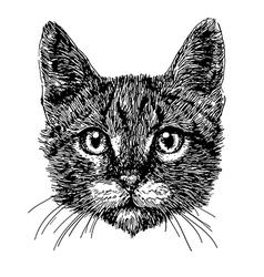 Cat 01 vector image vector image