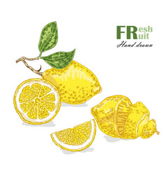 Lemon isolated on white background fruit vector