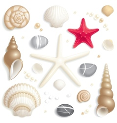 Seashell set vector