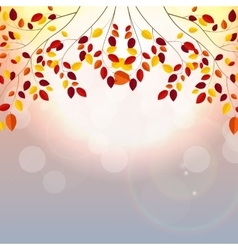 Natural sunny autumn leaves background vector