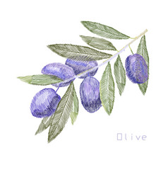 Embroidery needlework with olive vector