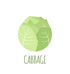 Cabbage icon in flat style on white background vector image