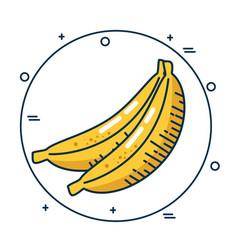 Banana fresh fruit handmade drawn vector