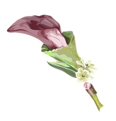 Calla burgundy color imitation watercolor vector