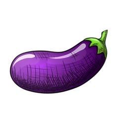 colorful sketch eggplant vector image vector image
