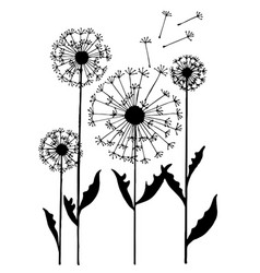 abstract dandelion on white background vector image