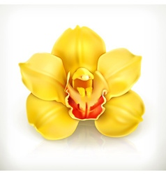 Orchid flower icon vector