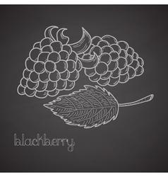 Chalkboard label with blackberries vector