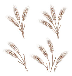 Hand drawn wheat ears and sheaves vector