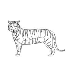 tiger wild animal vector image