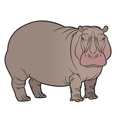 Hippo or hippopotamus vector