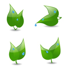 Icons with leaves and dew vector