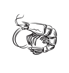 Black prawn vector