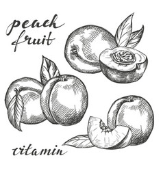 fruit peach set hand drawn vector image