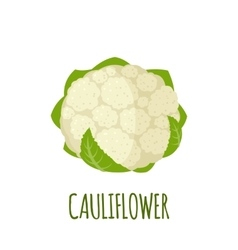 Cauliflower icon in flat style on white background vector