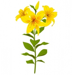 lilies vector image vector image
