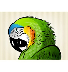 green parrot vector image