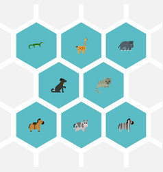 flat icons kitty kine horse and other vector image