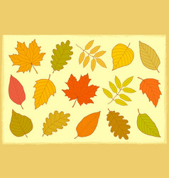 Set of hand drawn isolated autumn leaves vector