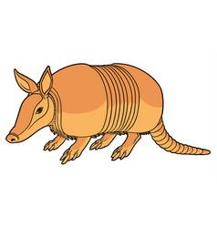 a cute armadillo vector image vector image