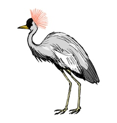 African crowned crane vector image vector image