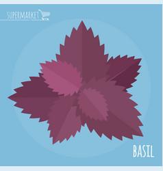 Basil flat design icon vector
