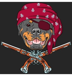 Dog rottweiler pirate with pistols vector