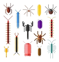 Spiders and scorpions dangerous insects animals vector image vector image